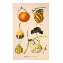 Pumpkin textil konyaruha (022PKN)
